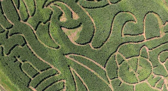 Ghost of the Corn Maze