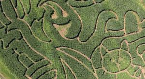 Ghost of the Louisburg Corn Maze