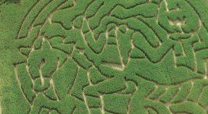 Headless Horseman corn maze