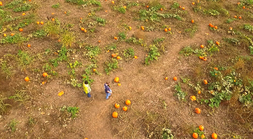 Explore the pumpkin patch at Louisburg Cider Mill