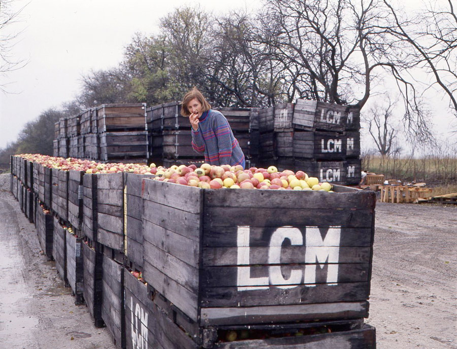 Shelly with wooden crates full of apples
