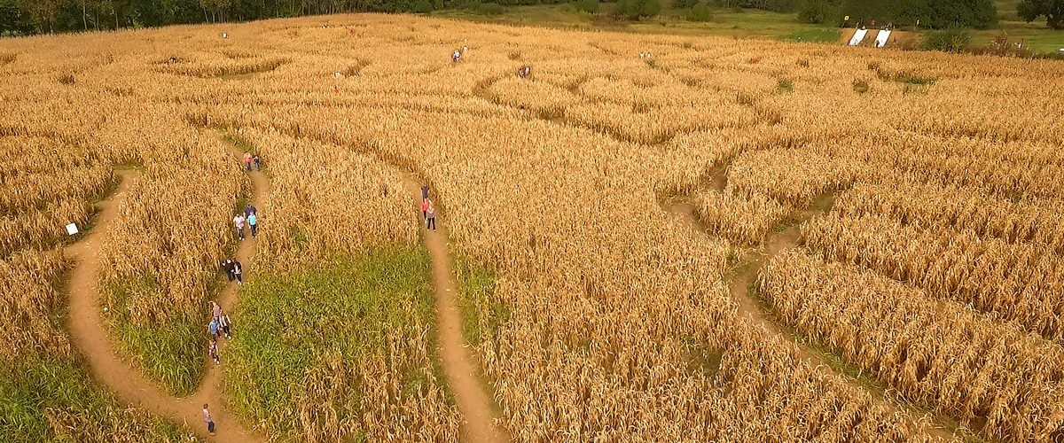 Aerial view of Louisburg Cider Mill's Corn Maze